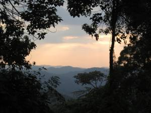 Bwindi Impenetrable Forest, Uganda. Photo taken by Russell Kingston