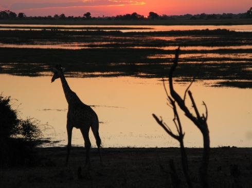 Sunset at the Chobe River  in Northern Botswana