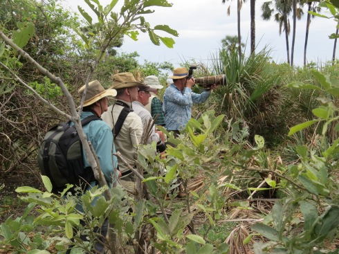Members of the RFCG EcoTour to Africa enjoying a hike in the Okavango Delta, Botswana