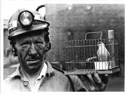 Old fashioned coal miner with his mine canary which helped to save many lives