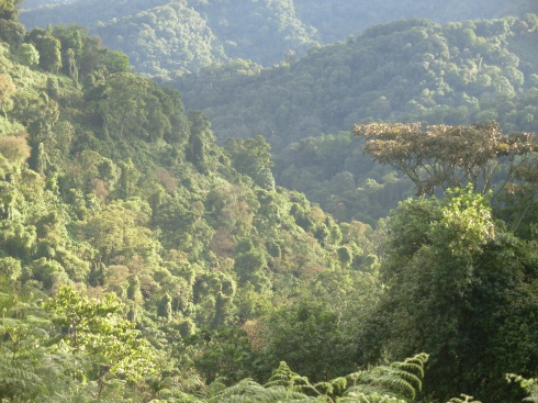 Bwindi Impenetrable Forest. Uganda. Photo. Simon Espley